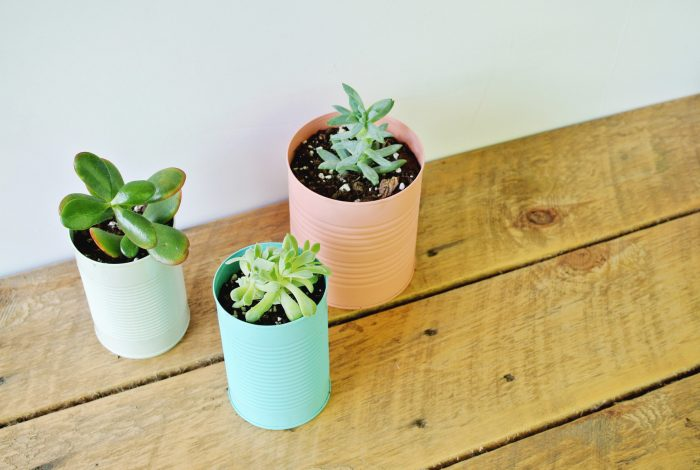 colorful-tin-can-planter-DIY-700x470